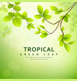 fresh tropical green leaves on natural vector image vector image