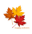 multicolored maple leaves -eps10 vector image