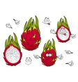 Vivid exotic pitaya fruits cartoon characters vector image vector image