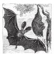 Brown bat vintage engraved vector image