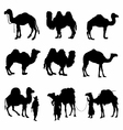 Camels Silhouettes detailed vector image vector image