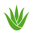 green aloe vera plant with leaves icon vector image