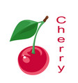 red cherry on a white vector image