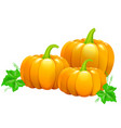 three beautiful ripe pumpkins vector image vector image