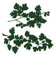 branch of hawthorn vector image