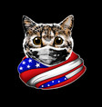 cat with american flag design vector image vector image