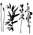 set of herbs and flowers silhouettes vector image vector image