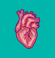 anatomical heart icon hand drawn style vector image vector image