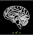 brain it is white icon vector image vector image