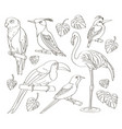 exotic set birds vector image