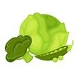 Green vegetables peas broccoli cabbage vector image vector image