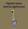 human organ icon in flat style digestive system vector image