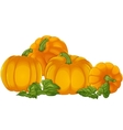 Pumpkins isolated on a white background vector image