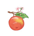 red apple hand drawn fruit on vector image