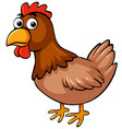 chicken on white background vector image vector image