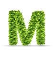 Letter M alphabet of green leaves vector image vector image