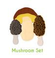 edible mushroom bolete morel flat style vector image