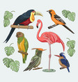exotic set birds vector image vector image