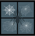 spiders web silhouette spooky nature vector image vector image