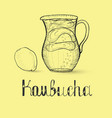 hand drawn kombucha beverage and lettering vector image