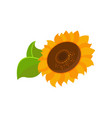 blooming sunflower cartoon vector image