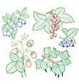 berries set vector image vector image