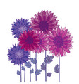 chrysanthemum flower element autumn aster vector image