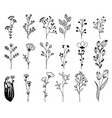 hand drawn design elements flowers branches vector image vector image