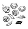 nutmeg spice drawing ground seasoning nut vector image vector image