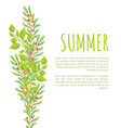 summer poster green branches leaves and berries vector image