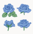 set collection blue roses with leaves isolated vector image