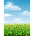 fresh green grass on the meadow vector image vector image