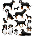 greater swiss mountain dog vector image