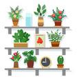 indoor office plants vector image