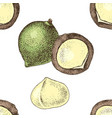 seamless pattern with hand drawn macadamia nuts vector image