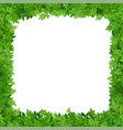 square frame of leaves vector image vector image