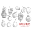 Natural fruits sketches for vegetarian food design vector image vector image