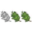 branch fir tree vintage color engraving vector image vector image