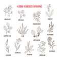 collection of herbs for burns vector image vector image