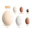 colored realistic eggs icon set vector image