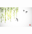 flying swallow birds and green willow branches on vector image vector image