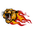 head a tiger in tongues flame vector image vector image