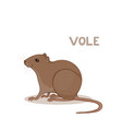 a cartoon cute vole isolated on a white vector image