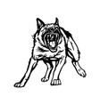 german shepherd in attack aggressive shepherd dog