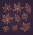 hand drawn autumn set with oak maple leaves vector image vector image