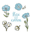 Hand drawn flax and cotton design isolated on vector image