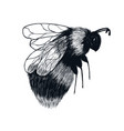 hand drawn sketch insect bumblebee in flight vector image vector image