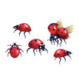 ladybug red black spots beetle flying insect vector image