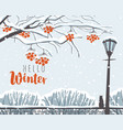 winter landscape with snow-covered trees in park vector image vector image
