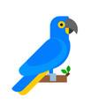 parrot bird blue breed species animal nature vector image